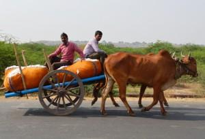 Red Kandhari bullock cart