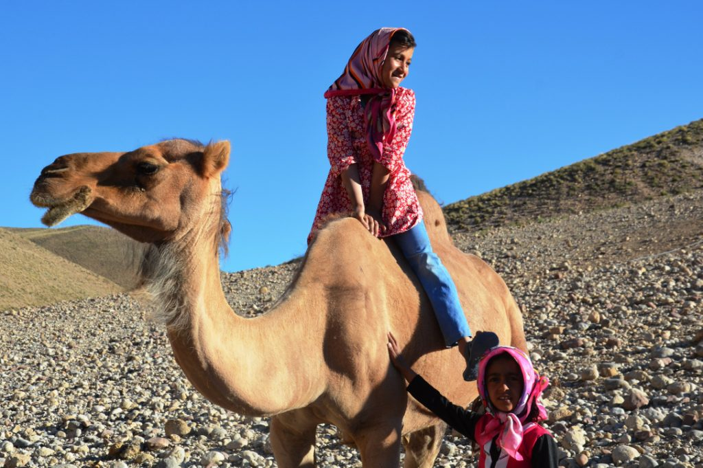 camels elikai comp